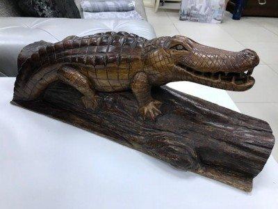 Крокодил изображение
